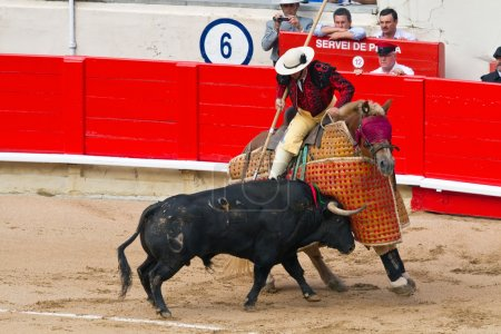 Picador cavalry bulls