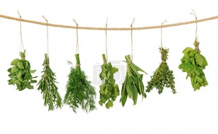 Photo for Fresh herbs hanging isolated on white background - Royalty Free Image