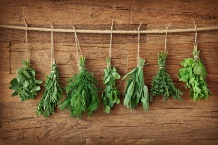 Photo for Fresh herbs hanging over wooden background - Royalty Free Image