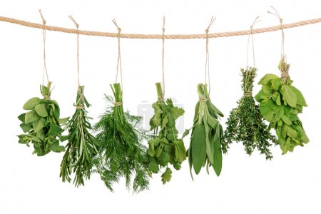 Photo pour Herbes fraîches suspendues isolées sur fond blanc - image libre de droit