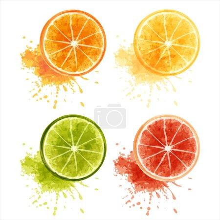 Illustration for Set of ripe citrus fruits - orange, lemon, lime, grapefruit. EPS10 - Royalty Free Image
