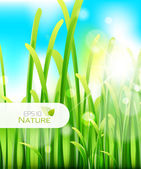 Blurred macro nature background Green grass with blurred sun and sky