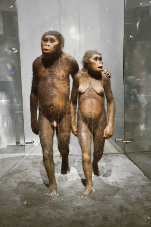 Humans in the American Museum for National History