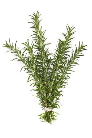 Bunch of Rosemary over White