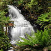 Regenwald-wasserfall