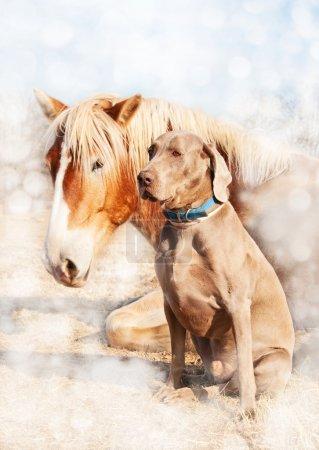 Weimaraner dog sitting next to his resting friend