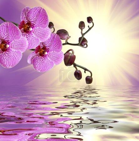 Foto de Primer plano de orquídeas Phalaenopsis - Imagen libre de derechos