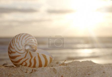 Nautilus shell on beach , golden sunrise over tropical sea