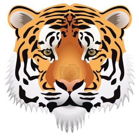Vector tiger head