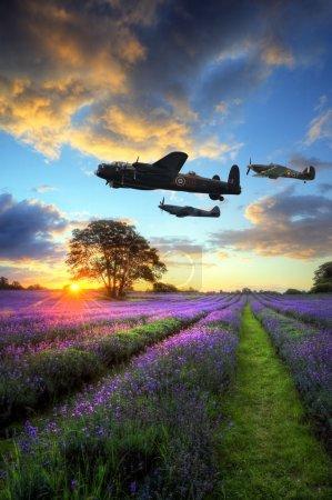 Photo pour Belle image de superbe coucher de soleil avec des nuages atmosphériques et le ciel au-dessus des champs de lavande mûre vibrant dans le paysage de la campagne anglais avec la guerre mondiale 2 raf airpl - image libre de droit