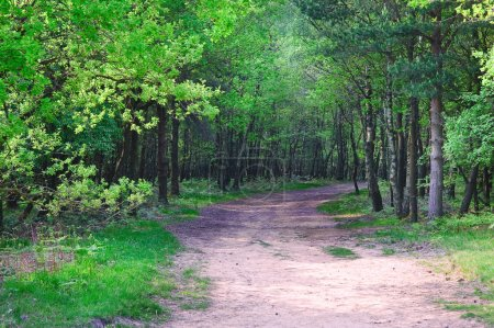 Path leading into vibrant Spring forest