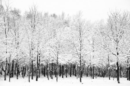 Beautiful snow and frost covered trees Winter landscape