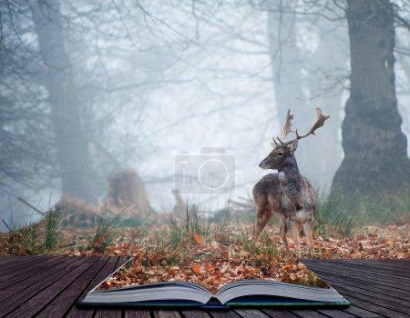 Photo pour Paysage de forêt dans le brouillard pendant l'hiver automne automne avec des daims errant dans des pages de livre magique - image libre de droit