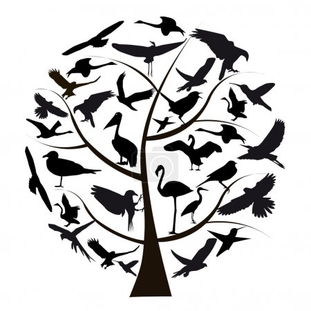 Photo pour Ensemble de différentes photographies d'oiseaux isolés sur fond blanc - image libre de droit