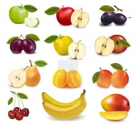 Illustration for Big group of different fresh fruit. Vector. - Royalty Free Image