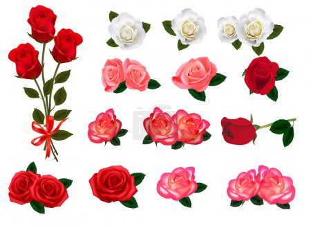 Illustration for Set of a beautiful roses on a white background. Vector. - Royalty Free Image