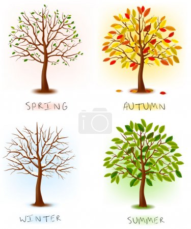 Illustration for Four seasons - spring, summer, autumn, winter. Art tree beautiful for your design. Vector illustration. - Royalty Free Image