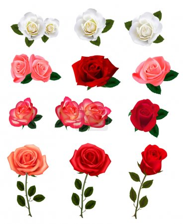 Group of a beauty roses. Vector illustration.
