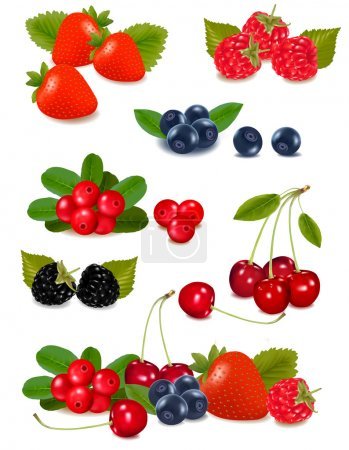 Big group of fresh berries. Photo-realistic vector illustration.