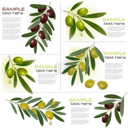 Set of backgrounds with green and black olives. Vector illustration