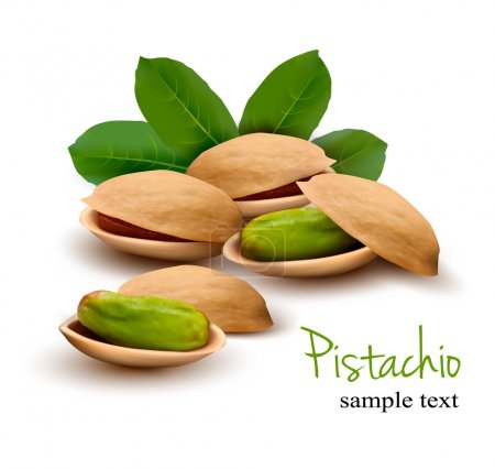 Pistachio with leaves. Vector