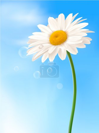 Beautiful white daisy in front of the blue sky Vector