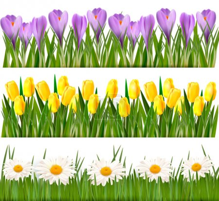 Illustration for Fresh spring and daisy borders Vector - Royalty Free Image