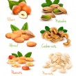 Big collection of ripe nuts. Vector...