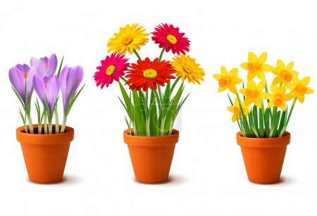 Spring colorful flowers in pots Vector