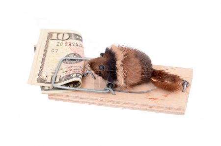 Mouse and money in tap