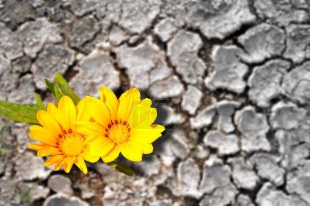 Photo pour Concept de persistance. Fleurs fleurissant sur la terre ferme - image libre de droit