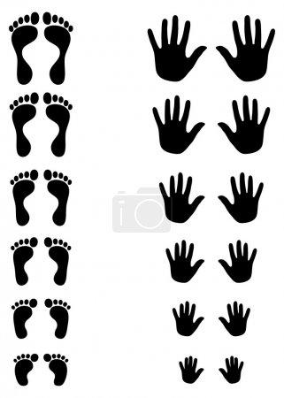 Illustration pour Ensemble de silhouettes de pied et de palmier de toldler à l'enfant à l'adulte montrant des formes changeantes et l'évolution - image libre de droit