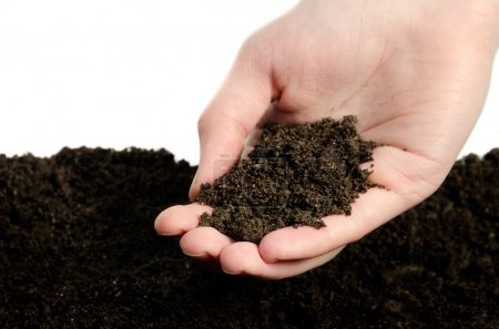Hand whith soil