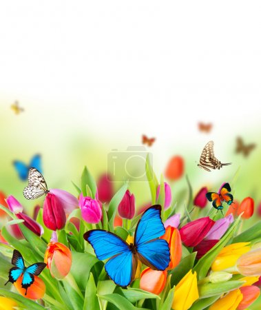 Butterflies on blossoms
