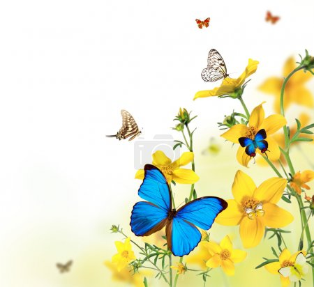 Butterflies in blooming meadow