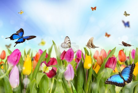 Photo for Tulips field with butterflies - Royalty Free Image