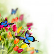 Spring flowers with exotic butterflies...