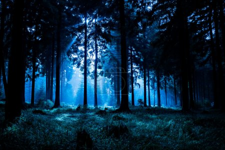 Photo for Night scene of autumn forest in Thuringia, Germany - Royalty Free Image