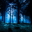 Night scene of autumn forest in Thuringia, Germany...