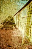 Woodland ghost