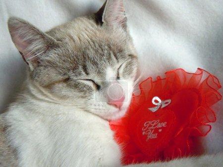 Photo pour Jeune chat, faire une sieste avec coeur rouge - image libre de droit