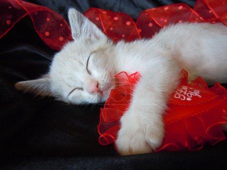 Photo pour Petit chaton étreindre le coeur rouge et dormir - image libre de droit