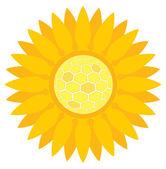 Slunečnice s voštiny vektorové pozadí konceptu