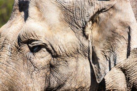Photo pour Peau d'éléphant - image libre de droit