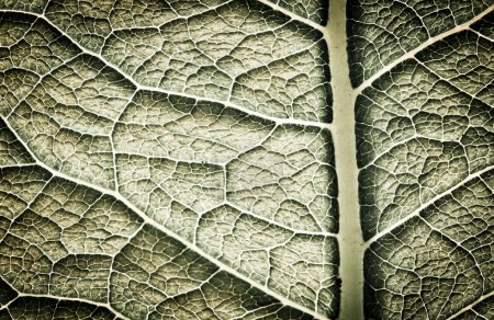 Photo for Dark leaf texture. Abstract spring background - Royalty Free Image