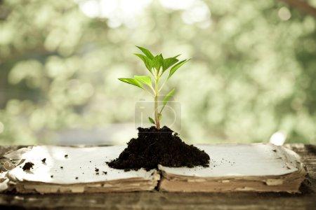 Photo pour Jeune plant sur vieux livre contre le fond naturel de printemps. notion d'écologie - image libre de droit