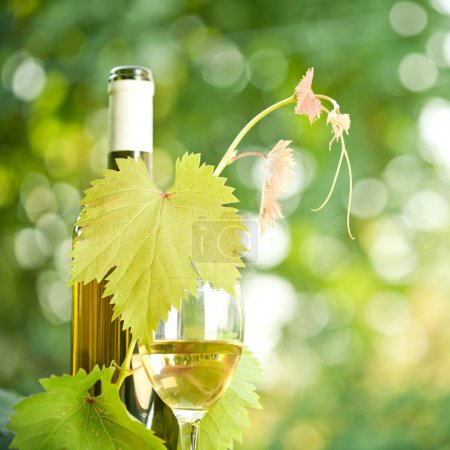 White wine bottle, grapevine and wineglass