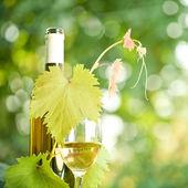 verre à vin, vigne et bouteille de vin blanc