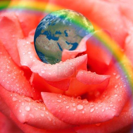 Earth on rose petal