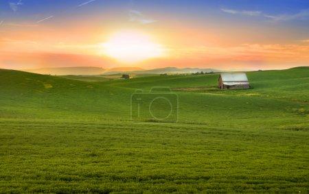 Photo pour Champs de blé panoramique sur les collines au soleil du soir - image libre de droit